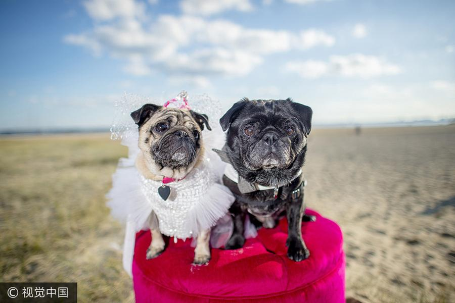 Pets Dressed As People Gain Social Media Attention Europe