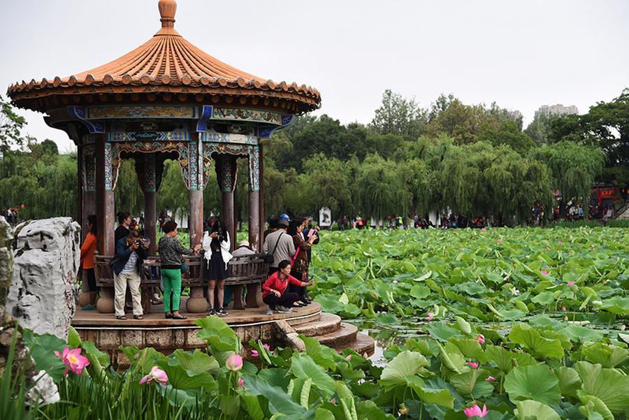 Lotus Flower Exhibition Held In Kunming Yunnan Province Travel