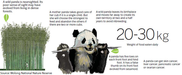 Things to know about a panda - Chinadaily com cn