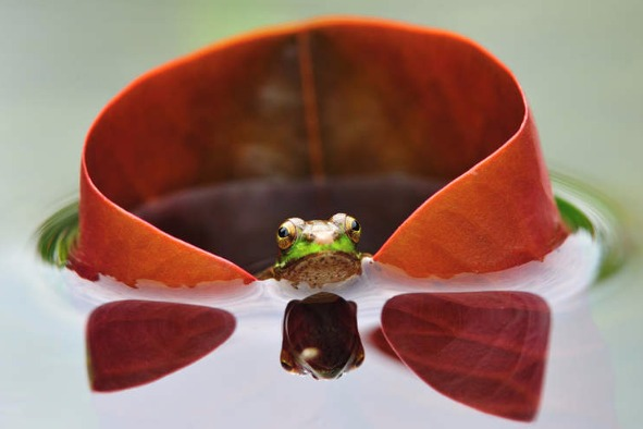 Wild-angle shots - Chinadaily.com.cn