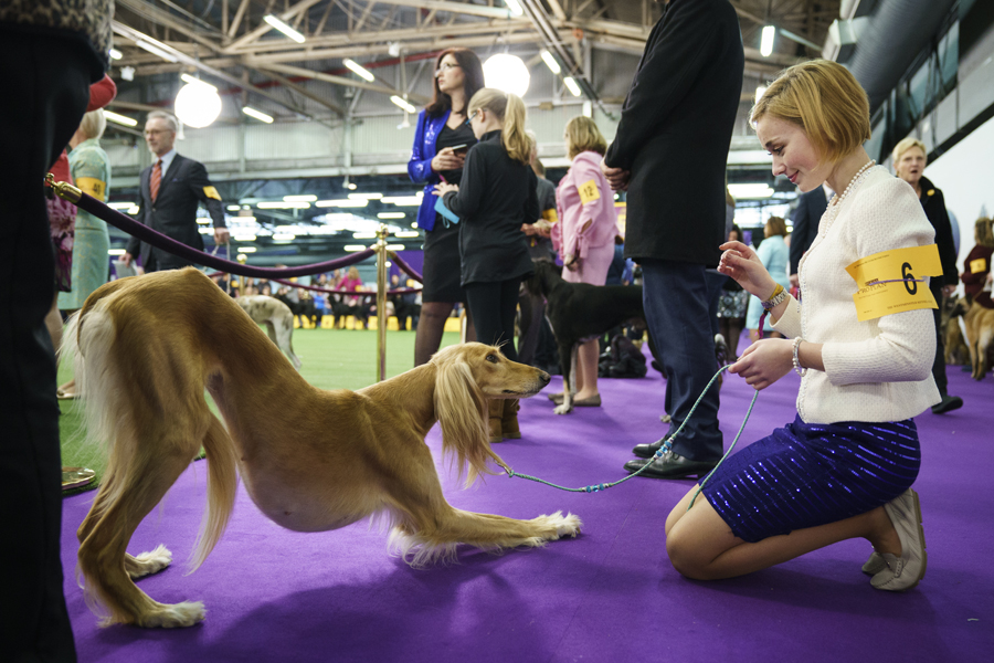 Chinese Breeds Vie To Become Top Dog Europe Chinadaily Com Cn