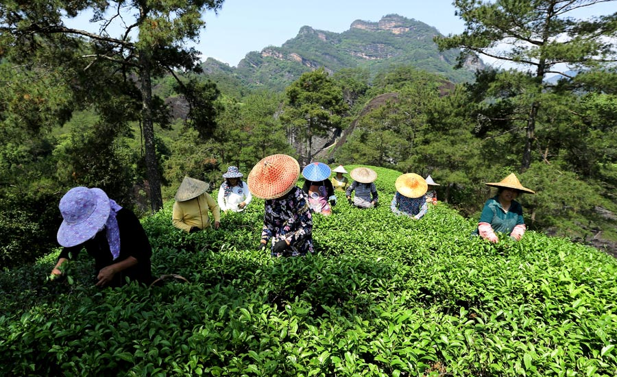 fujian tapping potential of natural resources to aid rural