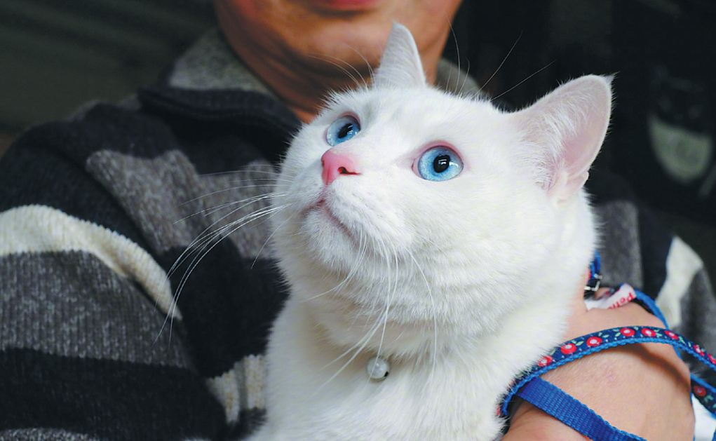 Love of cats is big business - Chinadaily com cn