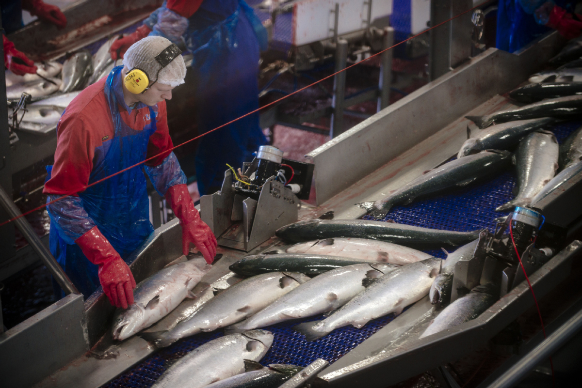 Norway optimistic about burgeoning demand for salmon