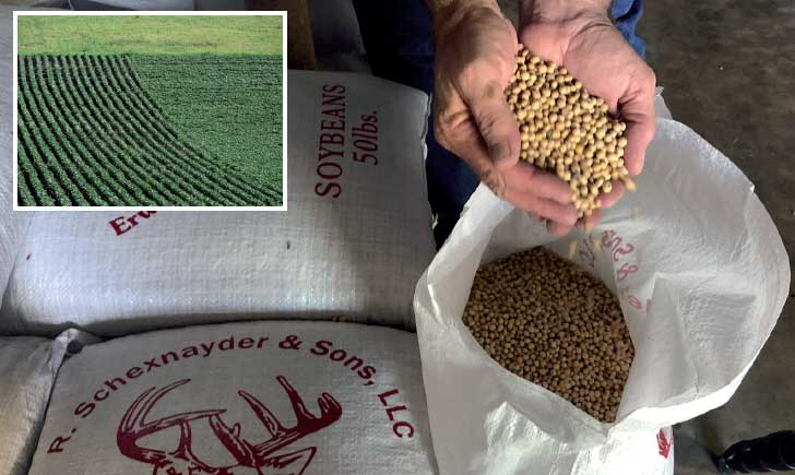 Chinese companies adopt measures to meet soybean need