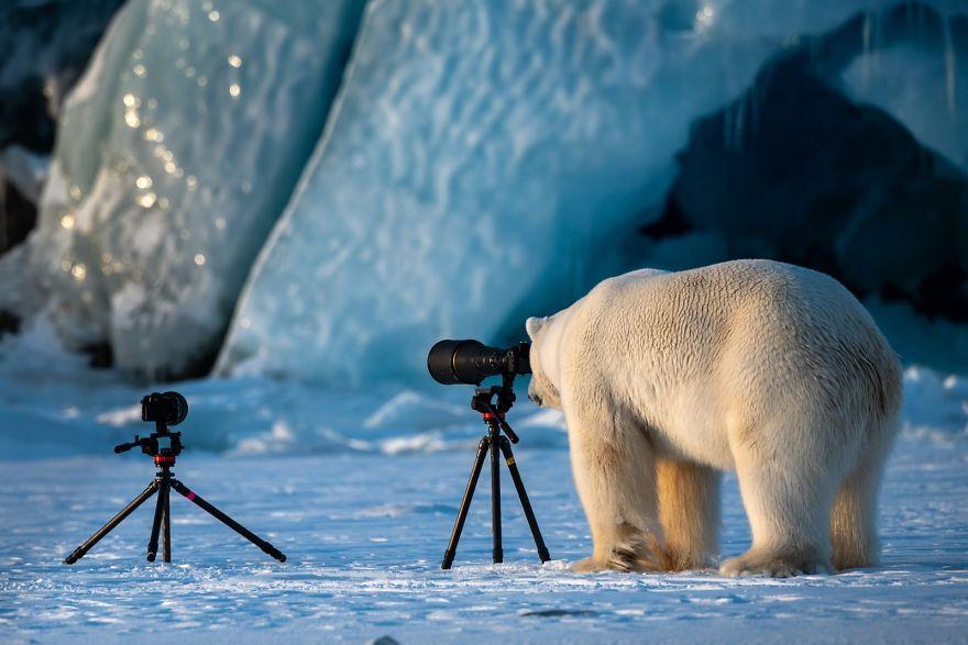 2018年最有趣的野生动物摄影作品,每一张都让你傻笑!