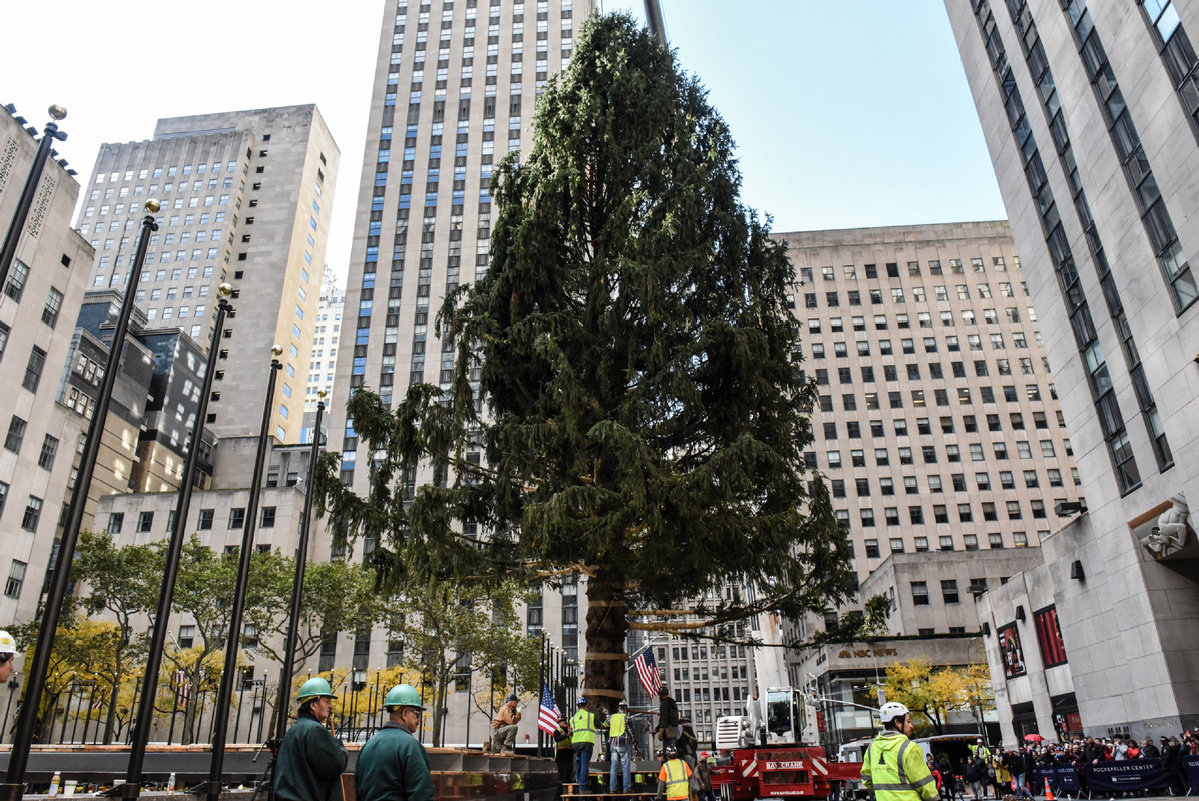 New York City\'s Rockefeller Center Christmas tree goes up ...