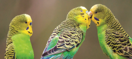 Mating strategy study explored in top science journal