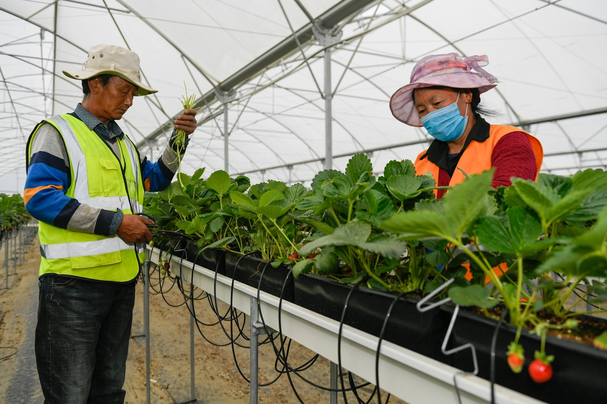 Tibet aims to give green industries a lift this year