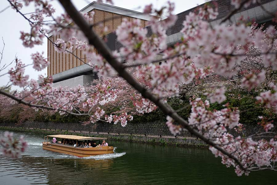13a5effc02fff Tourists from China view cherry blossoms from a boat in Kyoto, Japan.  [Photo by Liu Xingzhe/for China Daily]
