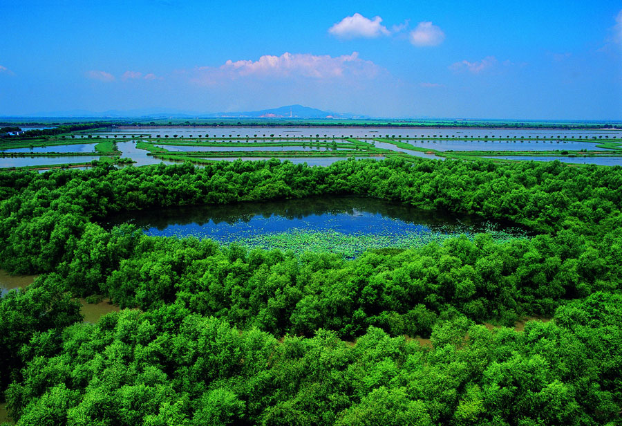 South China's Guangdong features nation's largest mangrove coverage