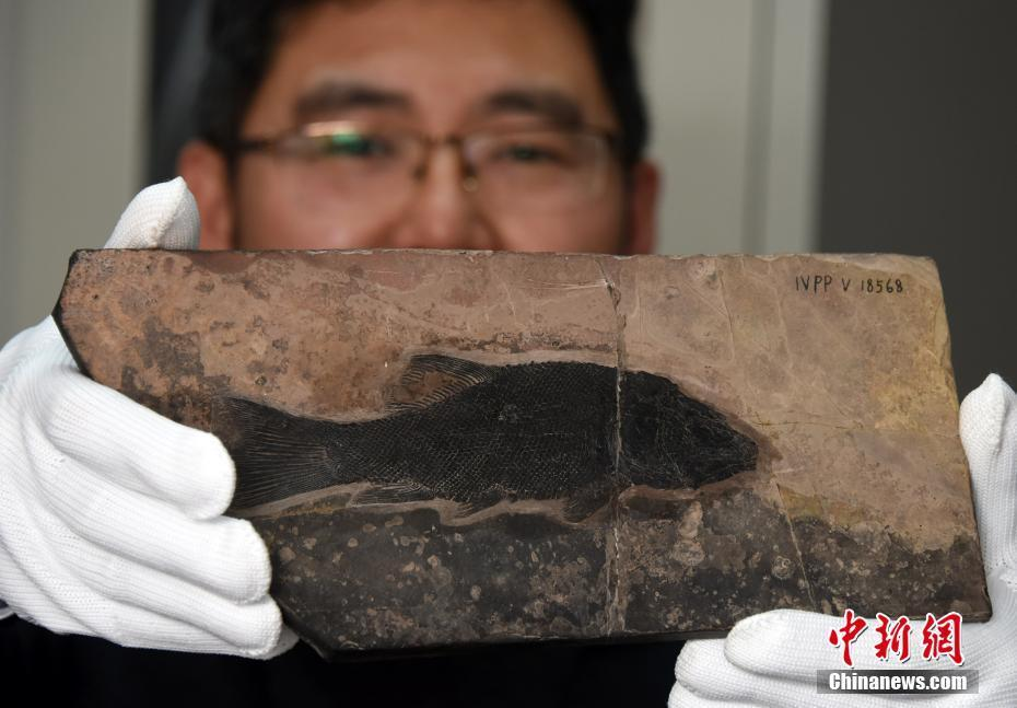 Chinese scientists identify new fish genus living 244 million years ago