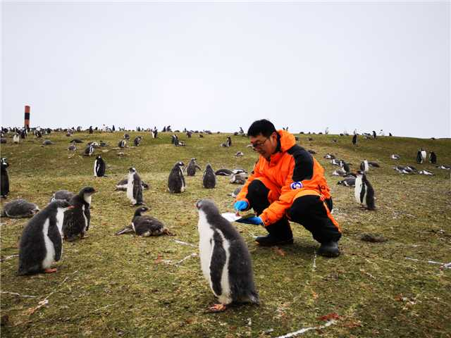 Tales from the ice: researchers share Antarctic experiences