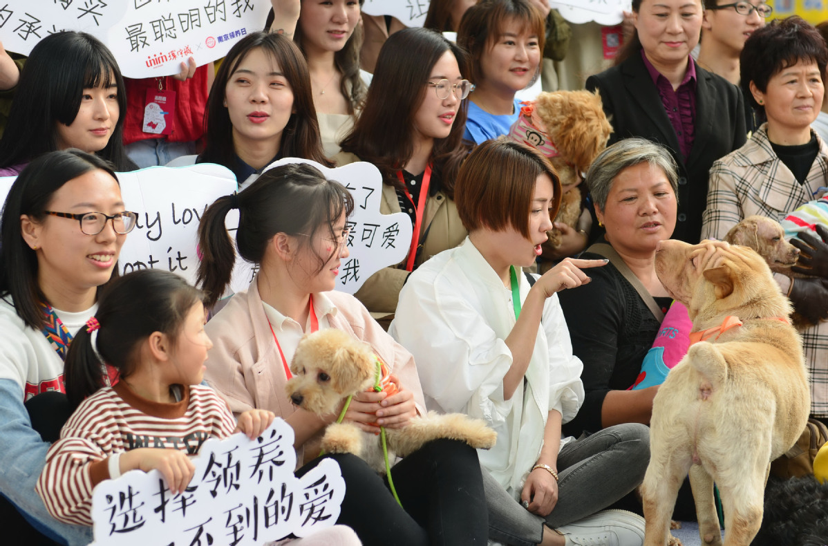 More Chinese choosing to adopt pets instead of buying