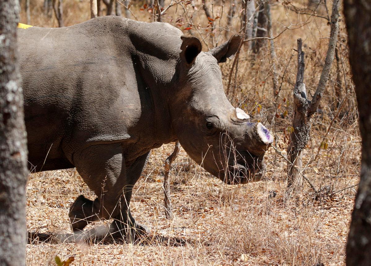 Ivory trade no longer elephant in corner - Opinion