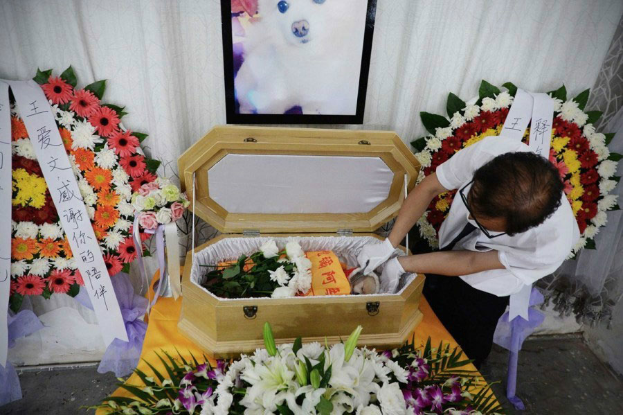 Pet funerals on the rise as owners say farewell