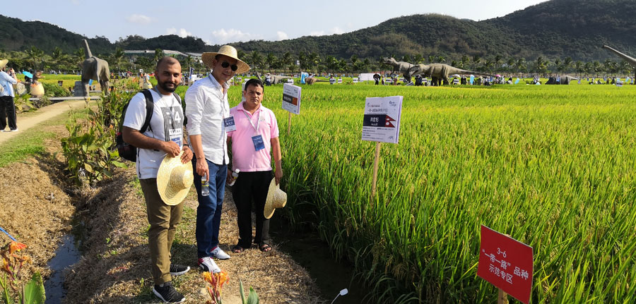 China boasts world's most applications for new agricultural plant varieties rights