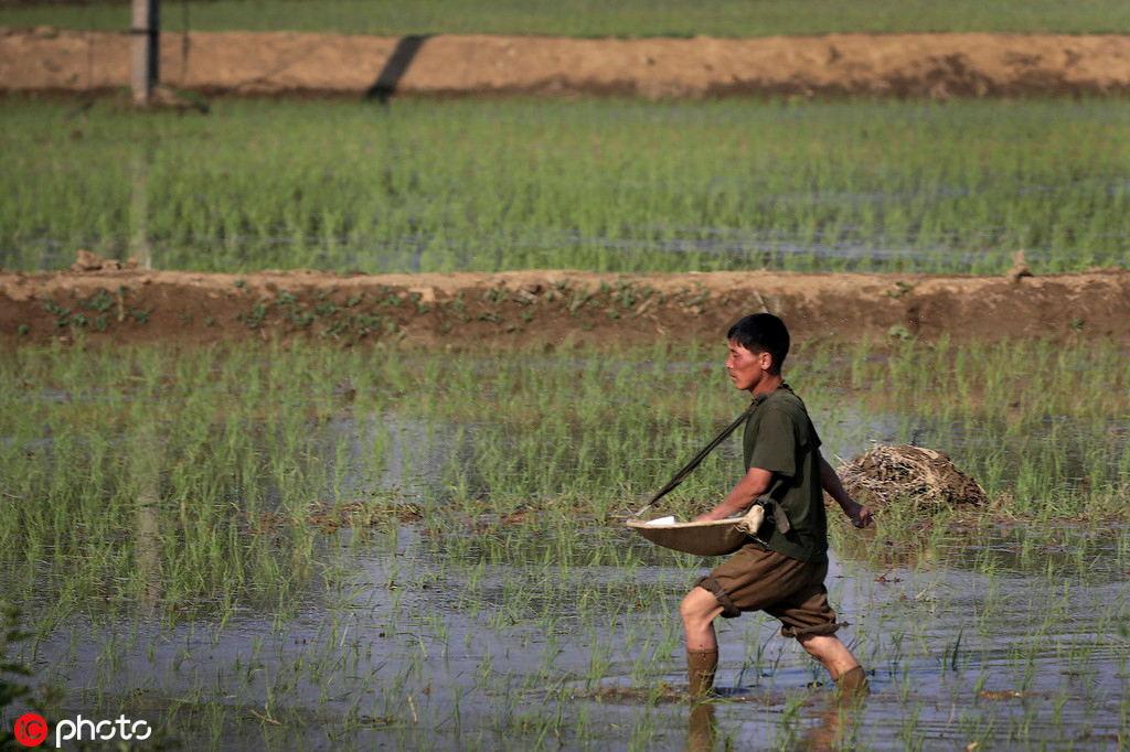DPRK faces food crisis after poor harvest, UN says - World