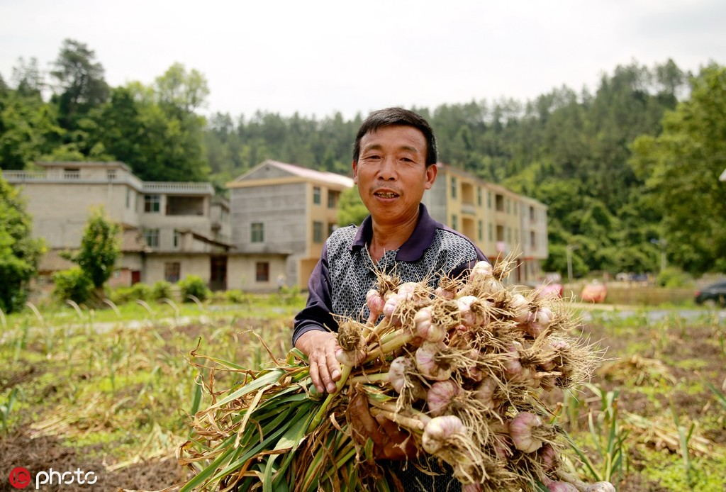 Garlic tariffs please California growers but stink for major US spice company - World - Chinadaily.com.cn