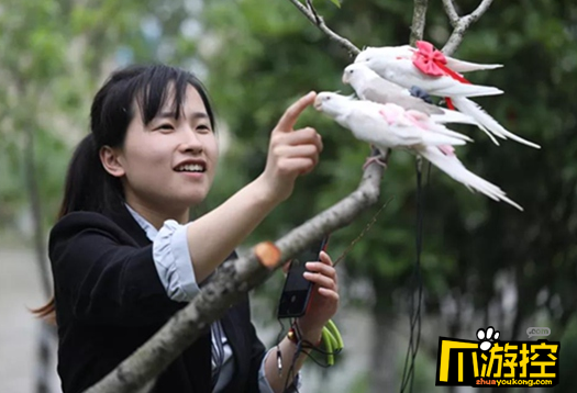 Chinese woman sells bird diapers, earns 30,000 yuan a month - Chinadaily.com.cn