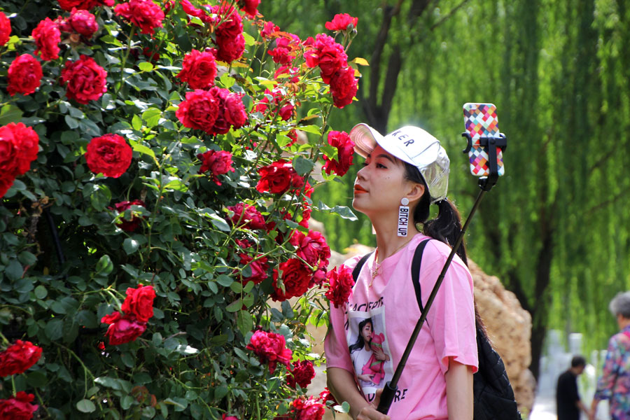 Chinese rose takes root in success story - Chinadaily.com.cn