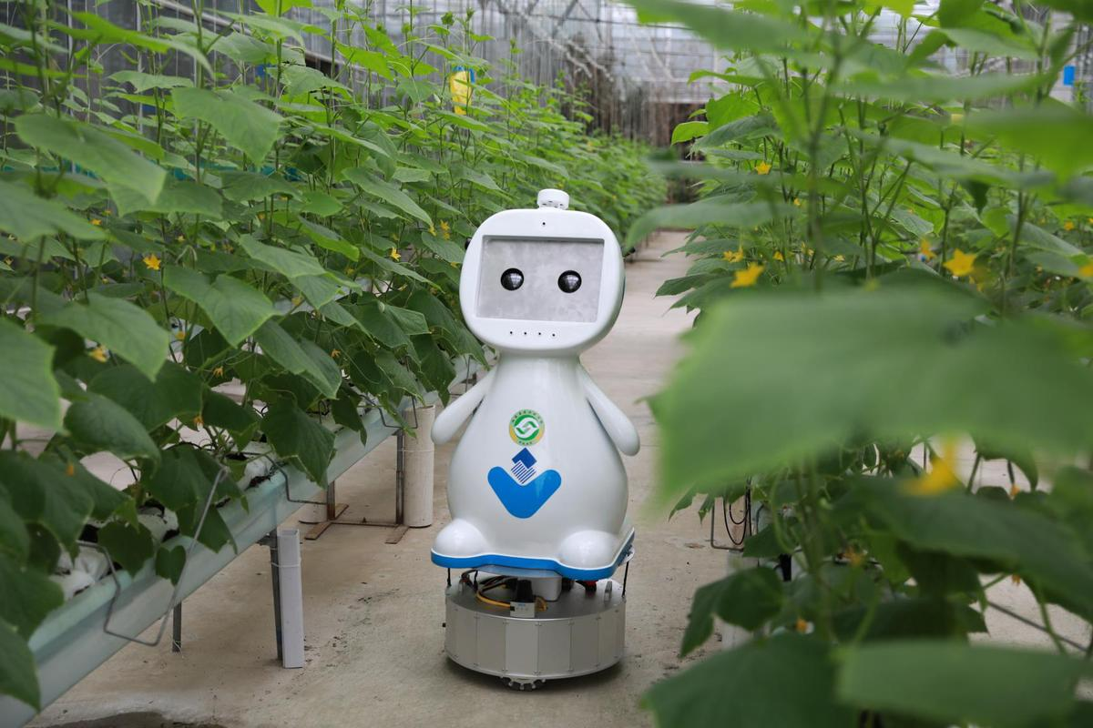 Farming robot makes its debut in Fujian - Chinadaily com cn