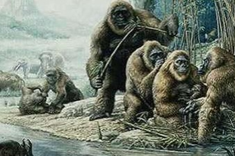 Scientists retrieve genetic materials from 1.9-m-yr-old giant ape fossil - Chinadaily.com.cn