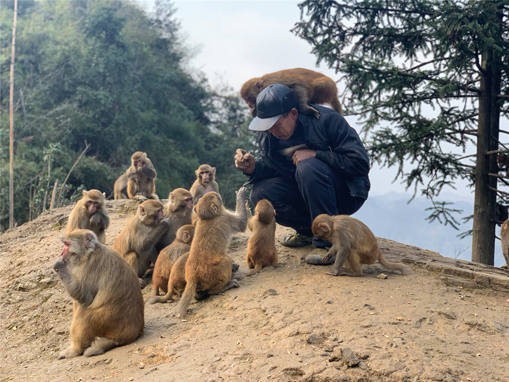 'Monkey King' cares for his primate pals - Chinadaily.com.cn