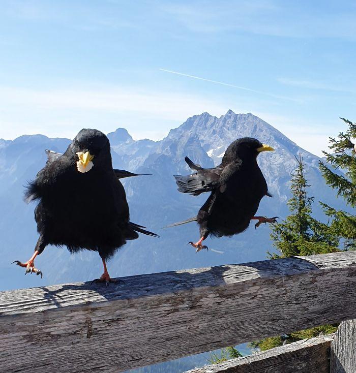 这些野生动物照片拍得挺糟 但是却可爱极了!