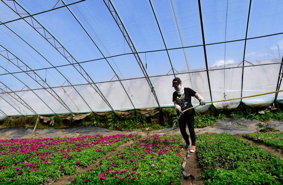 Herbs, Hotels and Home Cooking Raise Rural Residents' Incomes