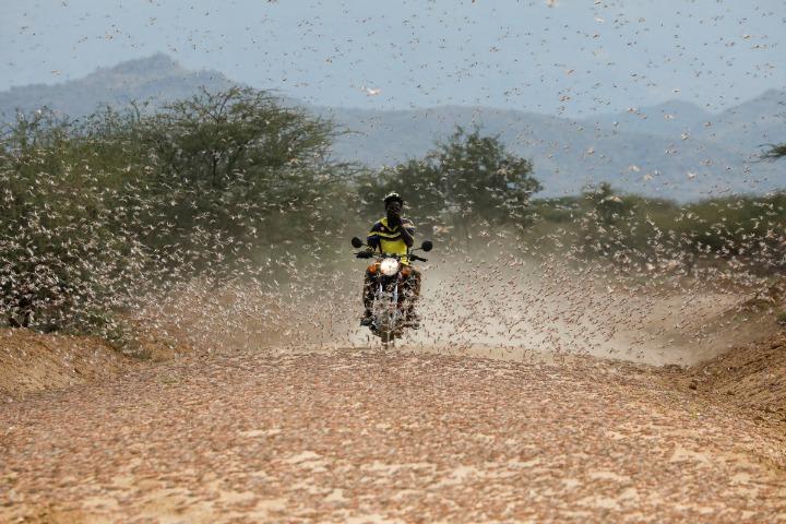 Desert locusts still a threat in east Africa