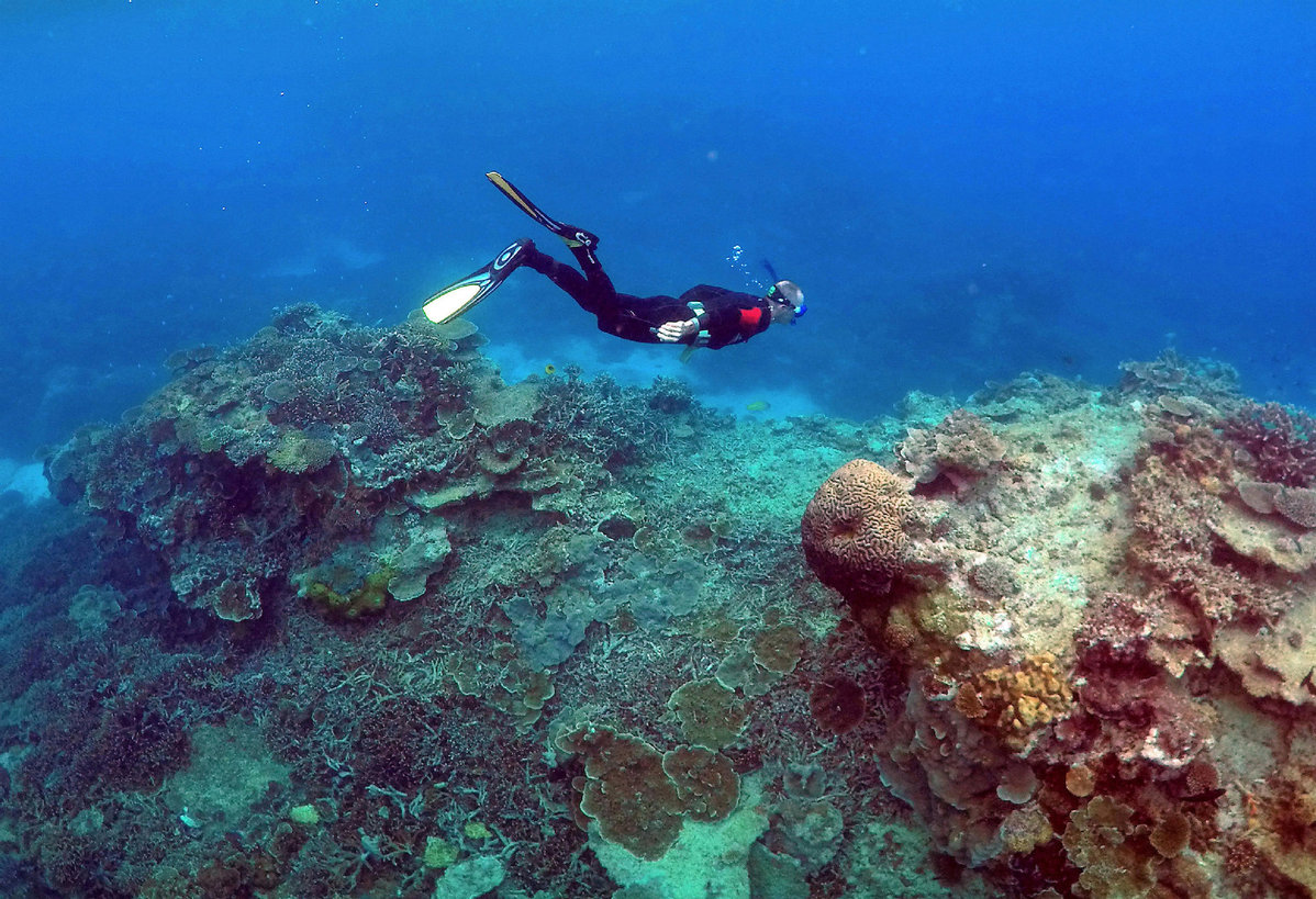 The Great Barrier Reef has lost half its corals within 3 decades