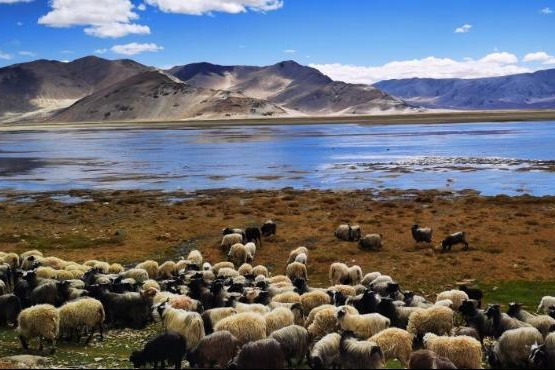 Seven decades on, Tibet ecology a success story