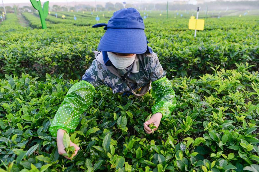 海南愿与非洲国家进一步开展农业合作