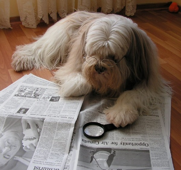 dog reading 的图像结果