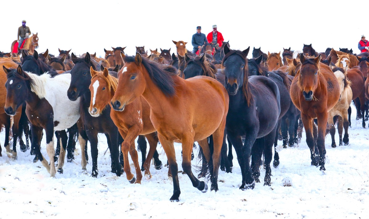Galloping Through China S Oldest Horse Farm In The Snow