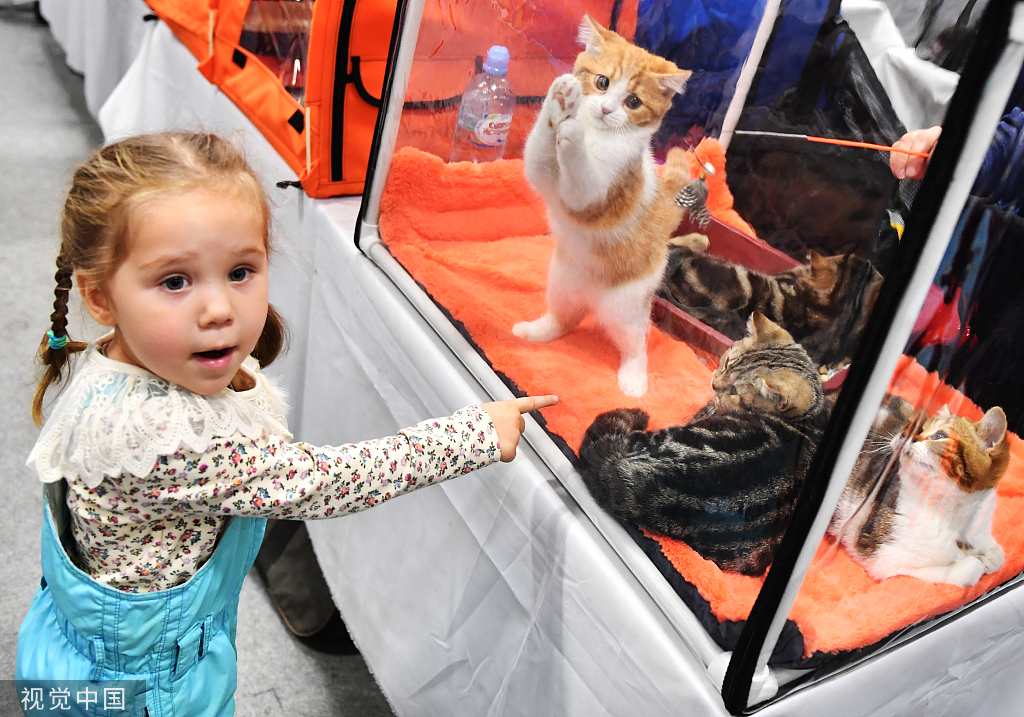 Cat show in Russia brings feline fun - Chinadaily.com.cn