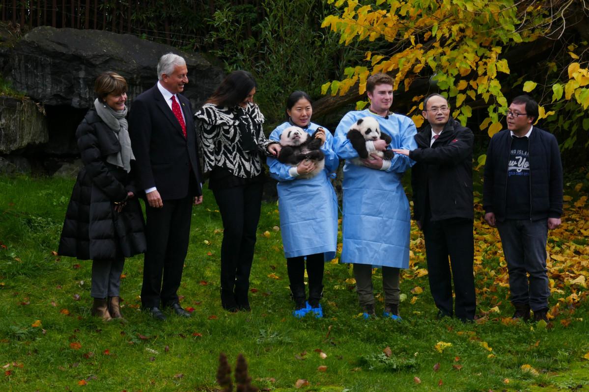 Belgium's twin panda cubs named amid media limelight - World -  Chinadaily.com.cn